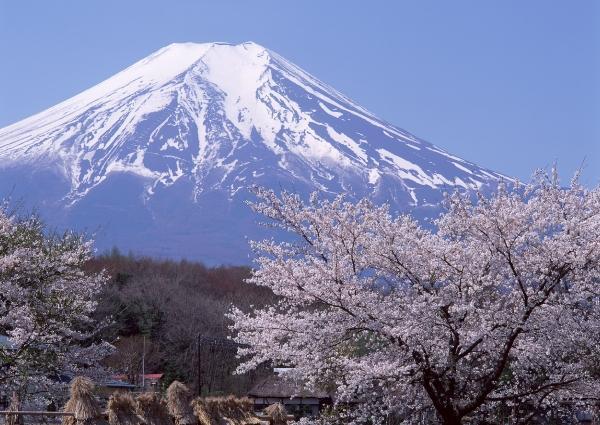 japan_1_20110812_2012615111
